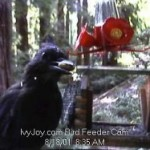 Ivy's Bird Feeder Webcam